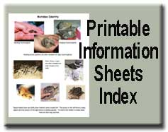 Info Sheet Index
